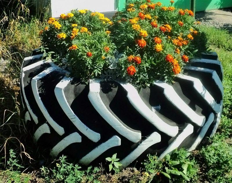 Крупная клумба из колеса от сельхозтехники