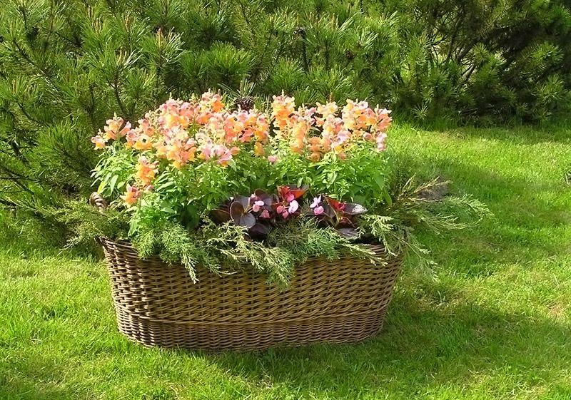 Корзина с цветами на дачном участке
