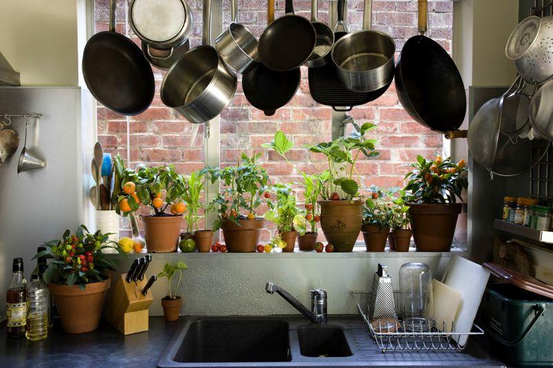 На кухне приживутся неприхотливые комнатные растения, хорошо переносящие влажность и повышенную температуру