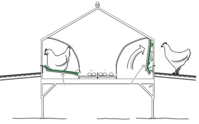 гнёзда с яйцесборником для кур