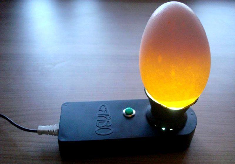 В это время вы можете аккуратно поменять подстилку и проверить яйца на овоскопе