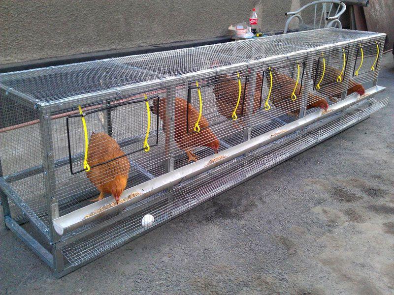 Гнездовья с устройством для сбора яиц