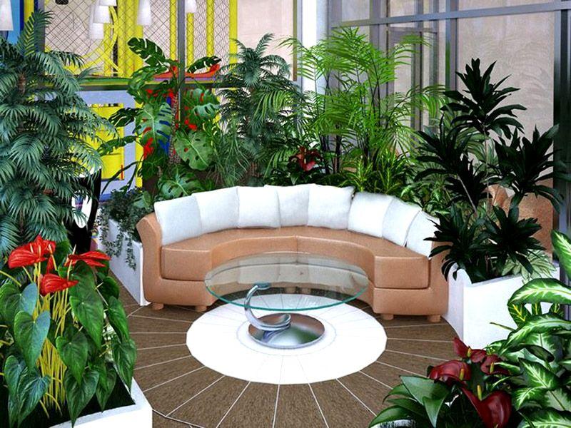 Небольшой зимний сад можно создать и в домашних условиях