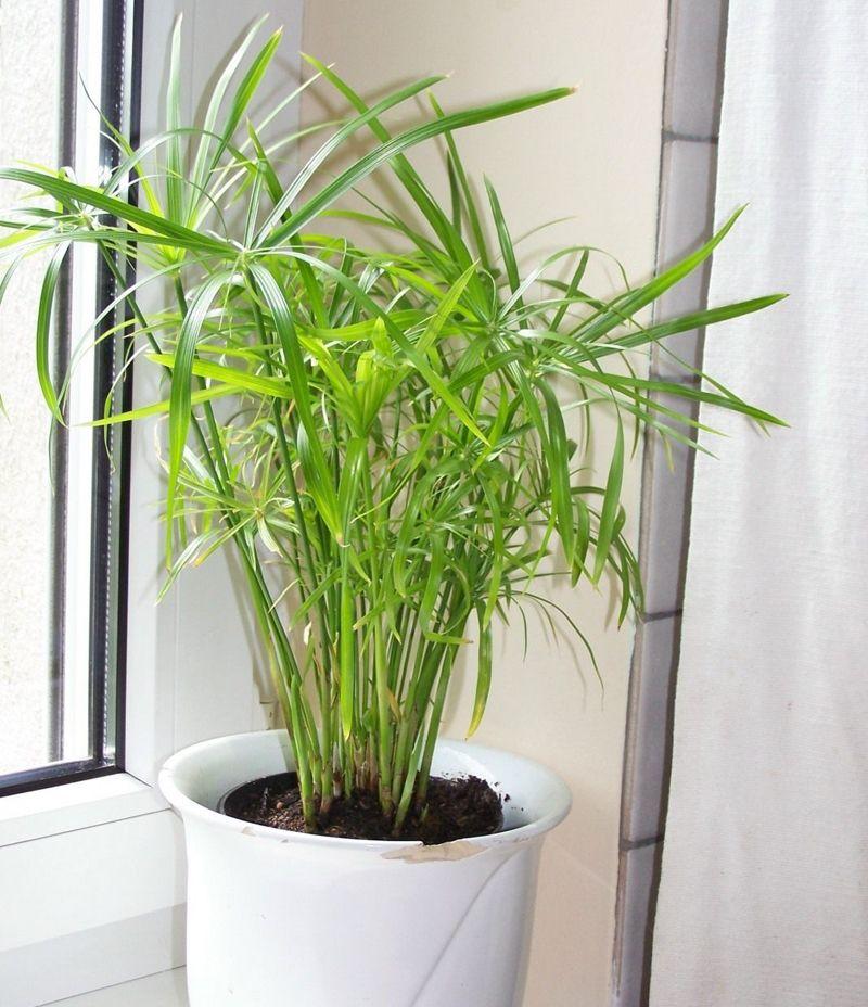 Как увлажнить воздух в комнате без увлажнителя: основные способы