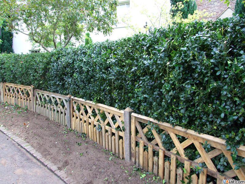 Живая изгородь с забором