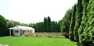 Многолетняя вечнозеленая быстрорастущая живая изгородь