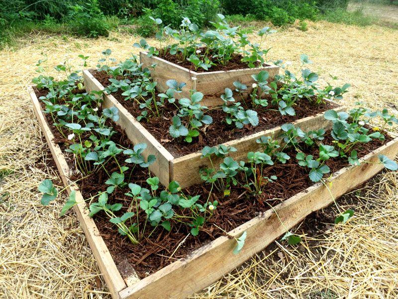 Специальные контейнеры для выращивания клубники