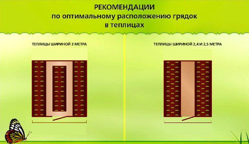 Рекомендации по размещению посадок внутри теплицы