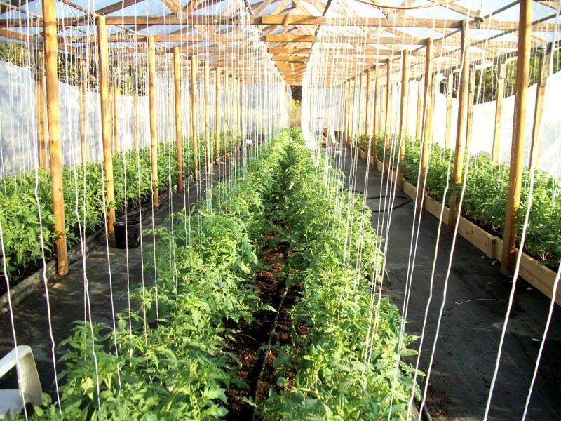 Подвязки для грядок часто применяются для огурцов и помидор