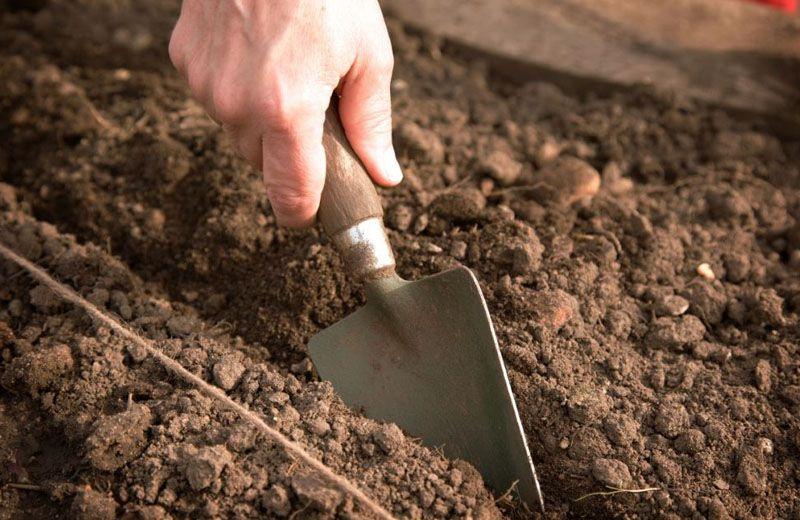 Обработка почвы является гарантией качественного развития саженцев и богатого урожая в будущем