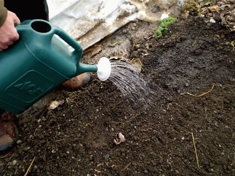 Весенние подкормки можно выполнять из разных удобрений. Есть сыпучие материалы, п некоторые виды нужно разводить и просто поливать почву