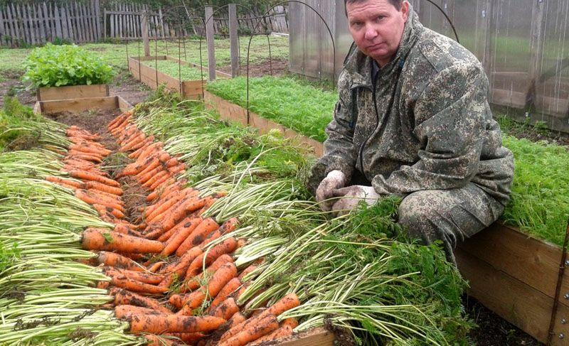Правильная подготовка и подкормка - залог великолепного урожая