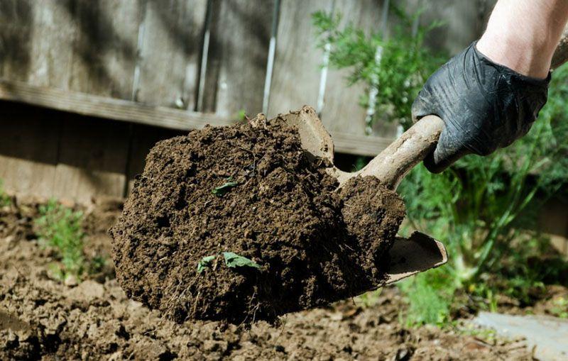 Осенью важно вытащить все корни и сорняки из огорода, иначе весной они вновь появятся на участке