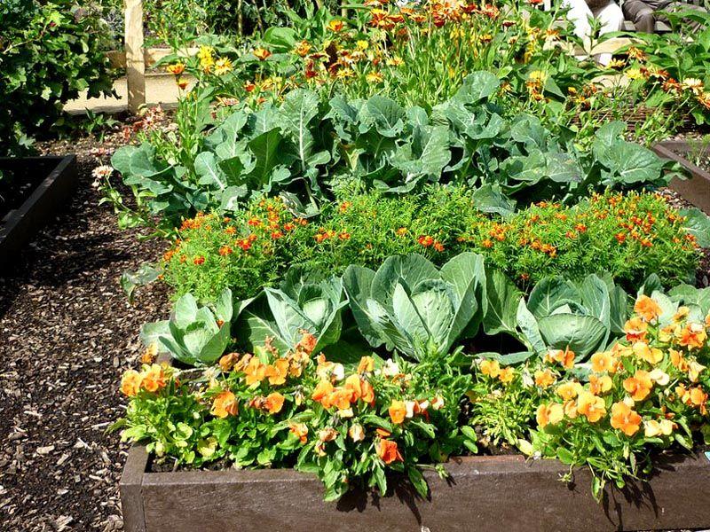 Смешанные посадки могут дать более богатый урожай