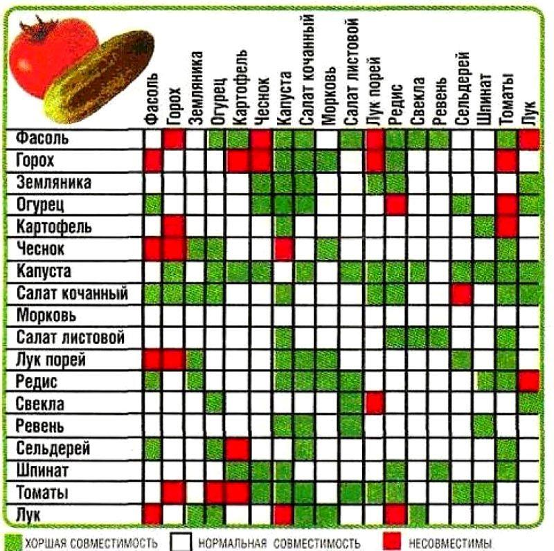 В таблице представлены варианты совместимости культур