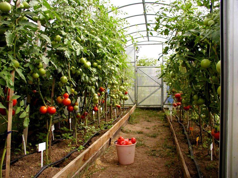 Грядки для томатов с самодельной системой полива