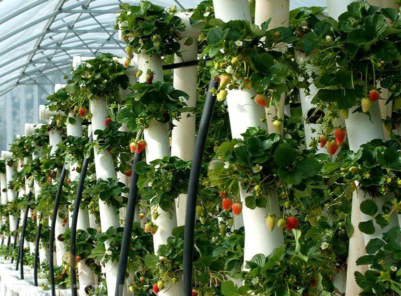 Вертикальные конструкции для клубники