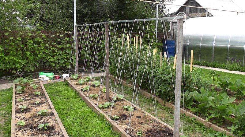 Вариант вертикального сооружения для выращивания огурцов