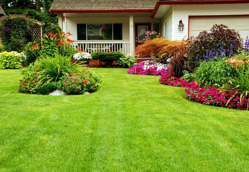 Сплошной газон с клумбами