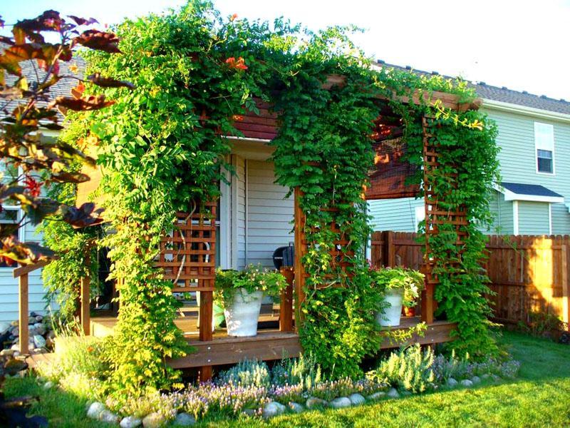 Вертикальное озеленение для веранды