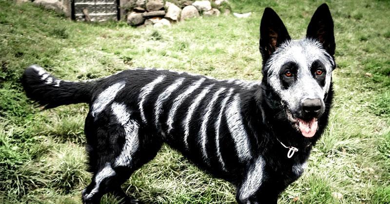 Доведите начатое до логического завершения, раскрасьте вашу собаку Баскервилей фосфоресцирующими красками