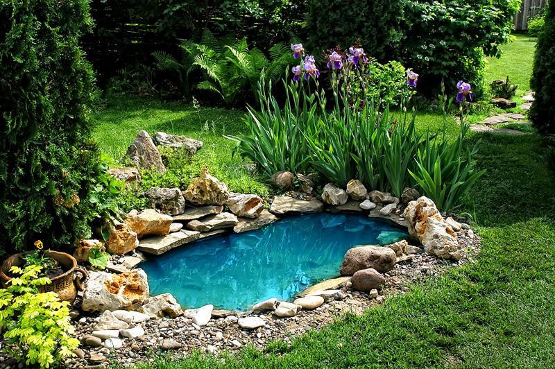 Даже маленькому водоему можно придать изысканный вид