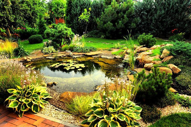 Искусственный пруд можно украсить водолюбивыми растениями