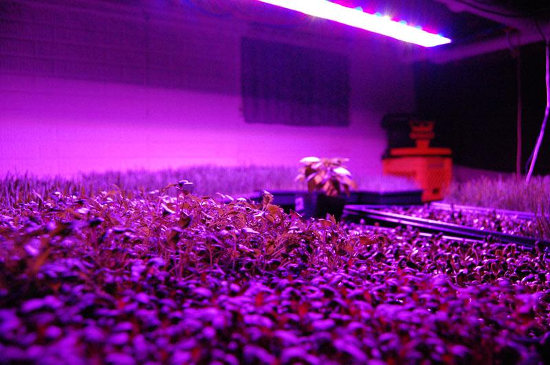 Фитолампы очень полезны для растений