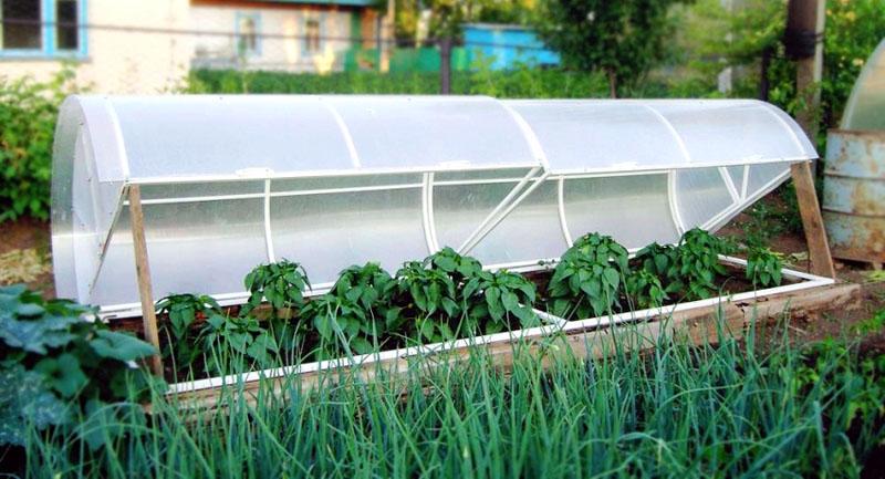 Удобный доступ к растениям