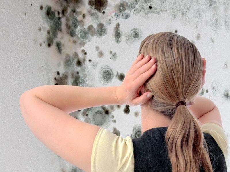 Плесень – враг не только ремонту, но и здоровью