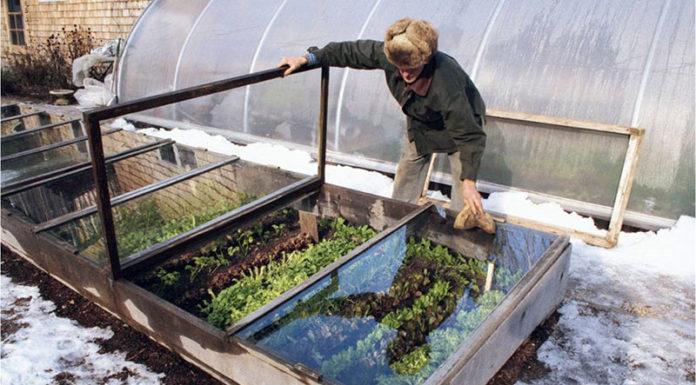 Богатый урожай без лишних затрат: как просто и быстро соорудить парник из подручных материалов своими руками