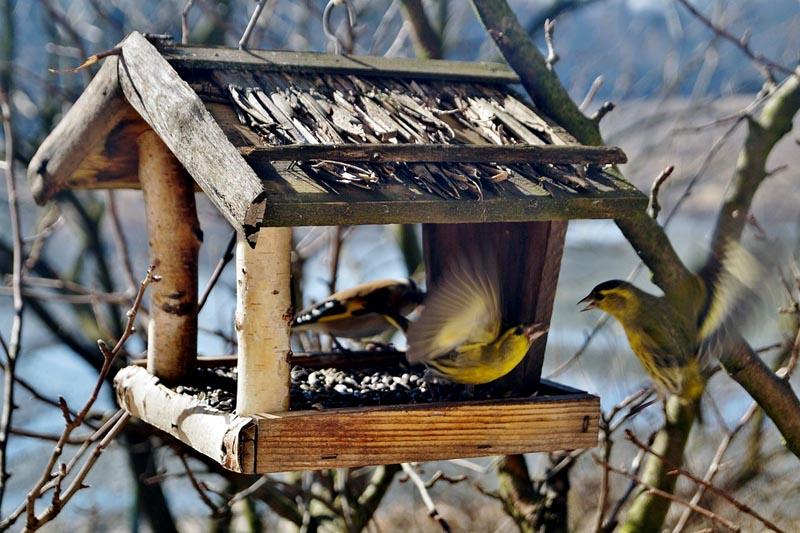 Красивый и простой домик для пташек