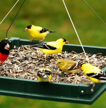Kак сделать кормушку для птиц своими руками
