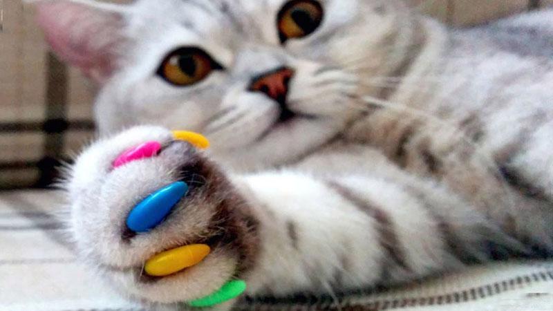 Не каждая кошка будет рада антицарапкам, для кого-то это настоящий стресс