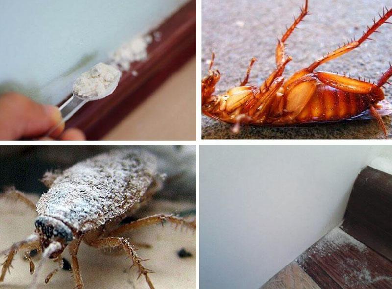 Порошок эффективно воздействует на насекомое