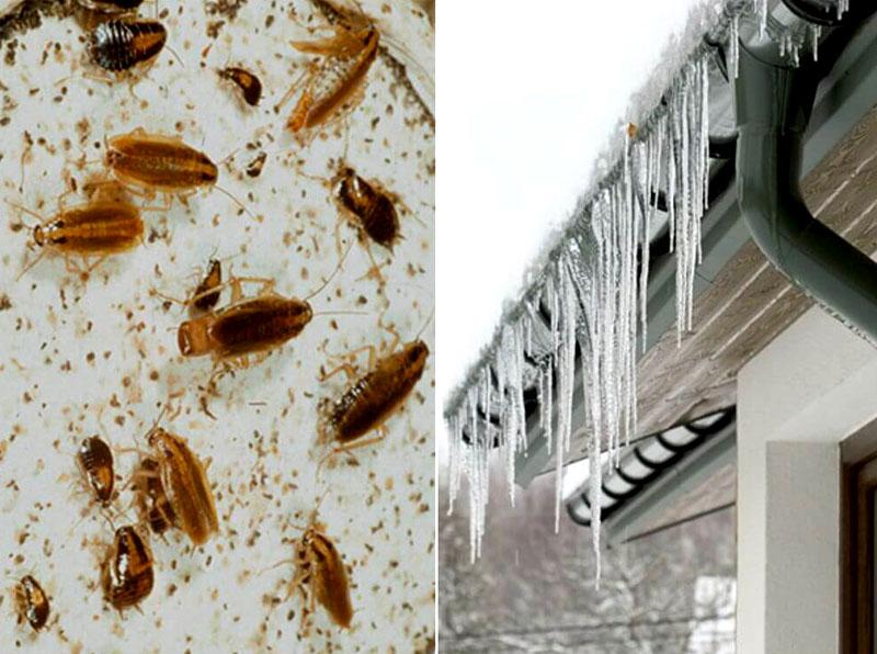Чтобы полностью уничтожить колонию, нужно на несколько часов при температуре от-10°C открыть окна