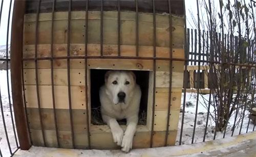 Как сделать самостоятельно вольер для собак: фото и пошаговый мастер-класс