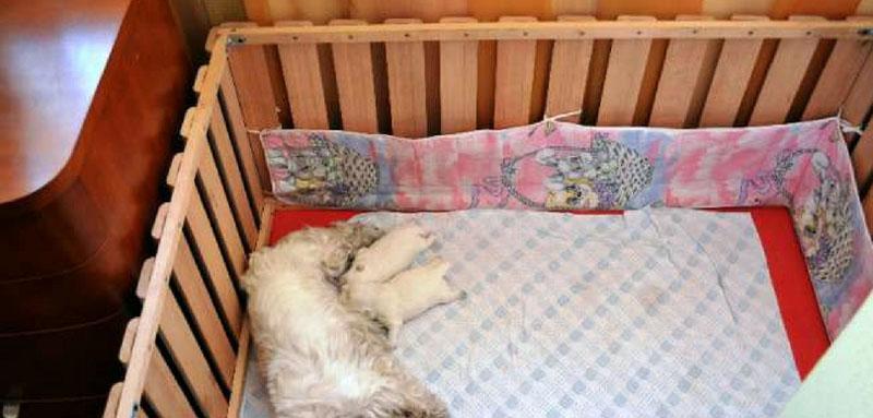 Вольер для взрослой небольшой собаки и двух щенков