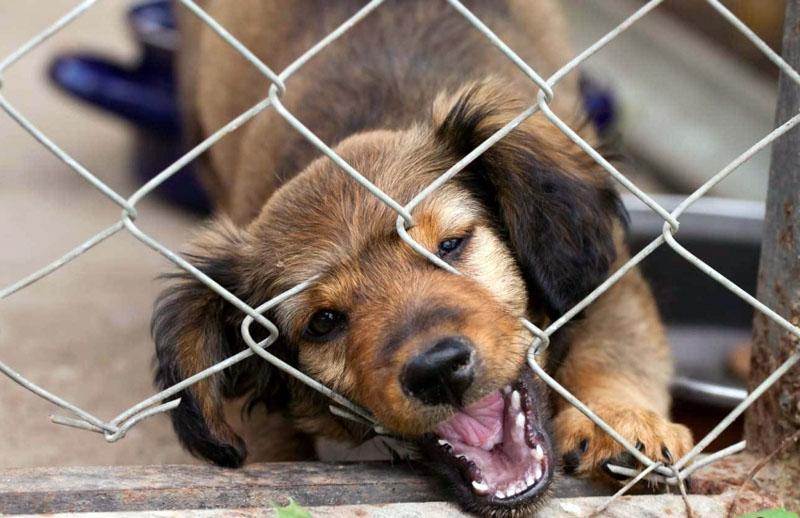 Сетка-рабица – не лучший вариант для стенок вольера, особенно такого, где будет жить некрупная собака