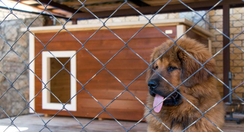 Просторный вольер для собак