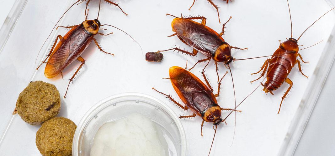 Эффективный способ избавления от тараканов в квартире