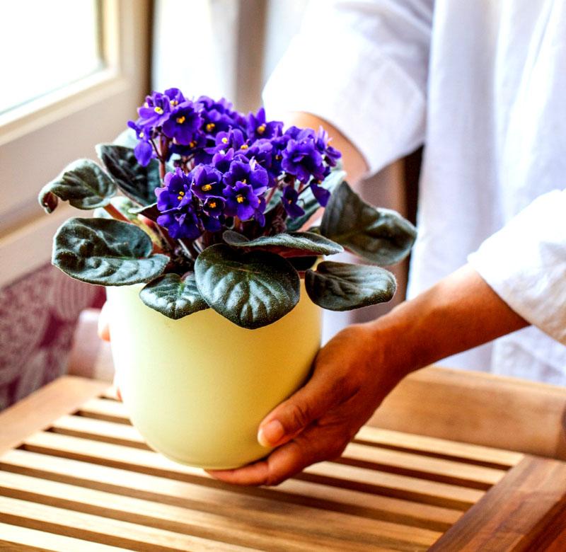 Искусственные цветы для домашнего интерьера: все «за» и «против»