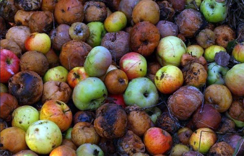 Главная причина появление фруктовых мошек
