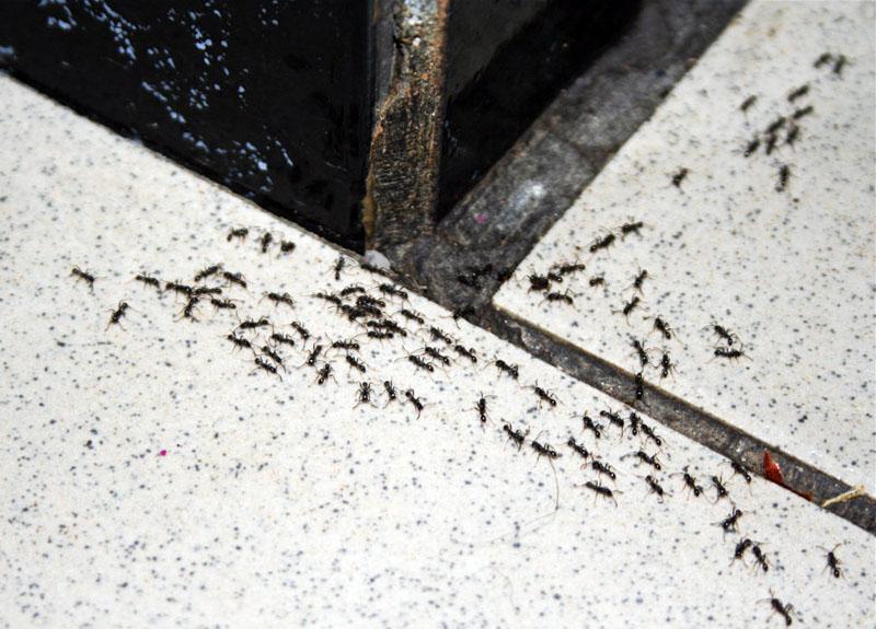 Проверяем почаще жилище на наличие муравьёв