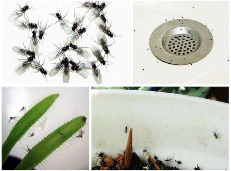 Места обитания домашних мошек