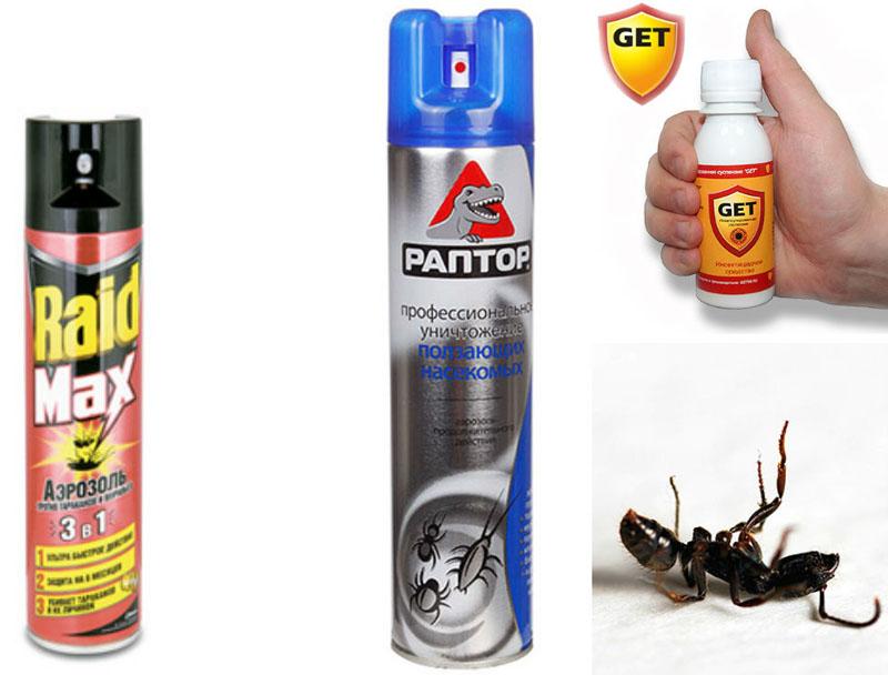 Как избавиться от чёрных муравьёв в доме – специальные спреи