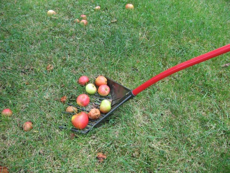 Грабли-лопата 2 в 1легко соберут отдельно плоды, а если устройство перевернуть – превращаются в штык с широким хватом