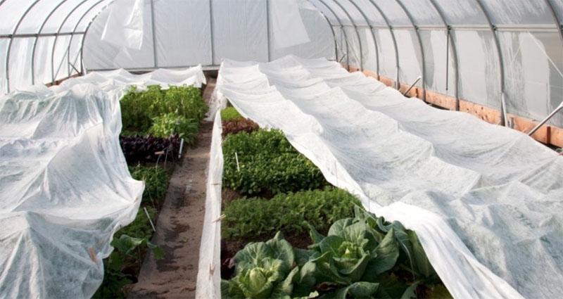 В теплице можно использовать дополнительный слой спанбонда для создания более благоприятных условий