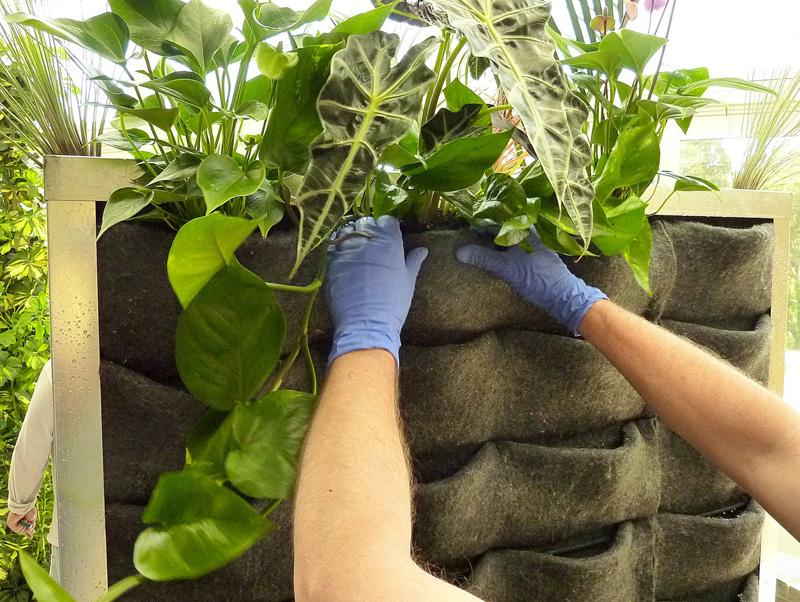 Гидропонные системы предполагают выращивание зелени в карманах из полимерного войлока