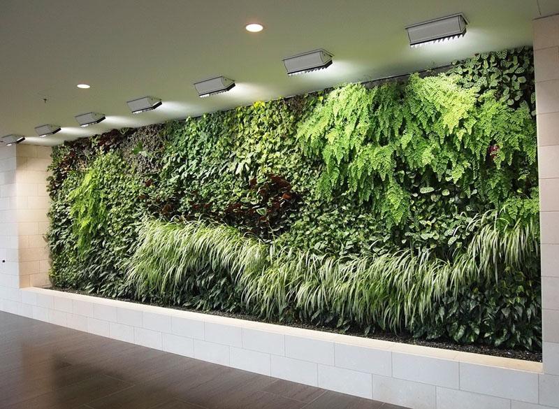 Что важно в выборе материала для вертикального озеленения: чтобы корни у цветов были прочными, стебли короткими или вьющимися, а зелень – обильной